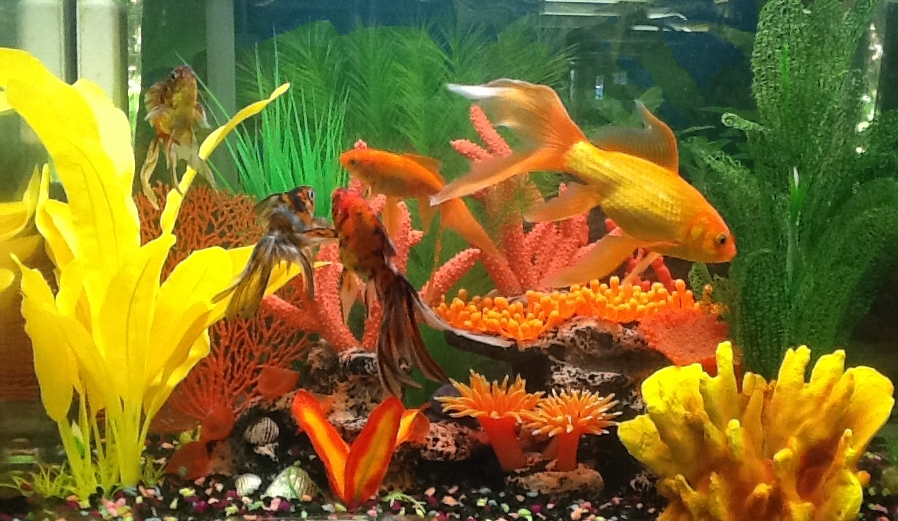 Fish tank facelift