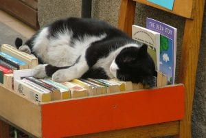Holiday cat relaxing with a book.